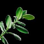 növény balról